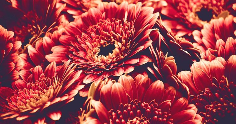 gerbera artificial